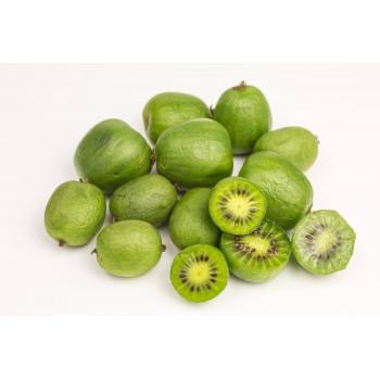 Mini Kiwi Nergi